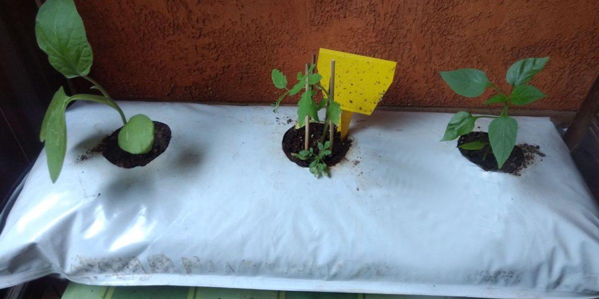 fazer uma horta em casa